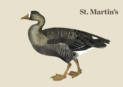 El ganso de san Martín